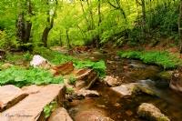 Saklı Orman 3