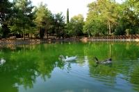 Tabiat Parkı