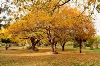 Mevsimlerden Hazan
