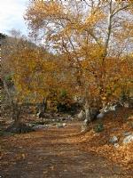 Dağlardan Sonbahar