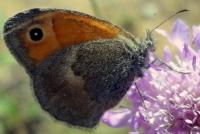 Kelebek-4