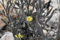 Kır Çiçeğim