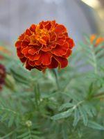 Havada Asılı Çiçek