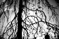 Sonbahar (ankara Gölbaşı Mogan Parkı)