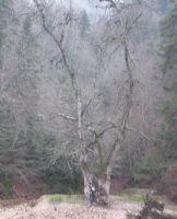 Yeşile Hasret Yalnız Ağaç