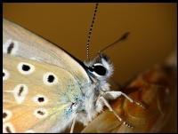 Kelebek Portesi