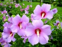 Çiçekler, Eskişehir Sazova