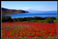 Süpan Dağı, Van Gölü Ve Gelinçikler