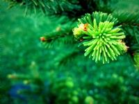 Yeşile Doymak.