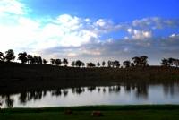 Kartal Gölü, Beyağaç