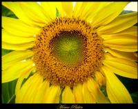 'umut Çiçeği' 2