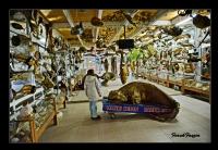 Deniz Canavarları Müzesi..