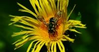 Çiçek/böcek_7