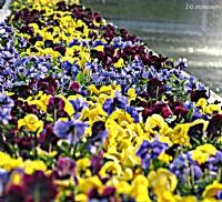 Çiçek..