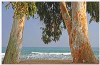 Akdenizliye Akdeniz