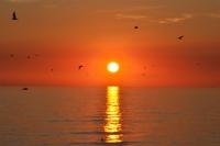 Güneşe Dön Yüzünü