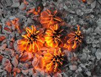 Ateş Çiçekleri