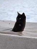 Saklambaç Oynayan Kedi....