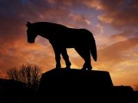 Fatih'in Atı