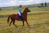 At Ve İnsan