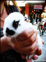 Kadıköy'de Minik Tavşan