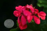 Bir Çiçek :)