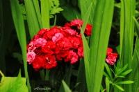 Bahçemde Bahar
