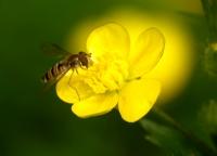 Sarı2