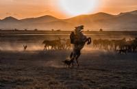 Yılkı Atları - Fotoğraf: Ömer Faruk Dereli