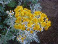 Sarı Bir Çiçek