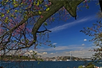 Baharın Rengi İstanbul'da Erguvan