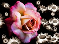 Bahçemin Güzel Çiçekleri