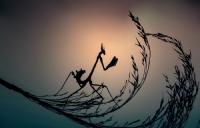 Bir Mantis'in Günlüğünden... - Fotoğraf: Erdem Arif Yiğit