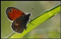 Kelebekler  Güzeldir..