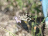 Hiç Böyle Güzel Olmamıştı Kelebeğim.
