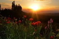 Günbatımında Çiçekler