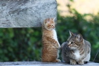 Garfield Ve Annesi :)