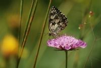 Kelebek Kolleksiyonum