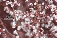 Bahar Geliyor