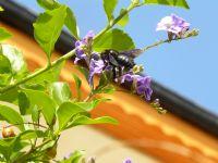 Arıyım, Her Çiçekten Bal Alırım