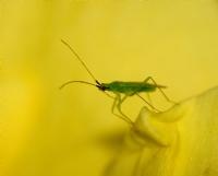 3mm Böcek