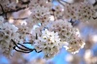 Çiçek Ağacı
