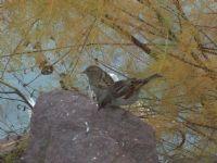 Kuşlar 2