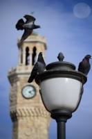 Saat Kulesi Ve Güvercinler