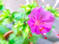 Pembe Bir Çiçek