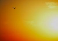 Güneşe Uçmak.