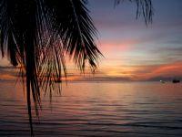 Sunset Palmiye