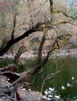 Ağaç Masala..