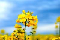 Doğanın Güzelliği Üzerine ..