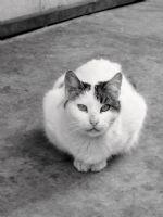 Oturan Kedi...